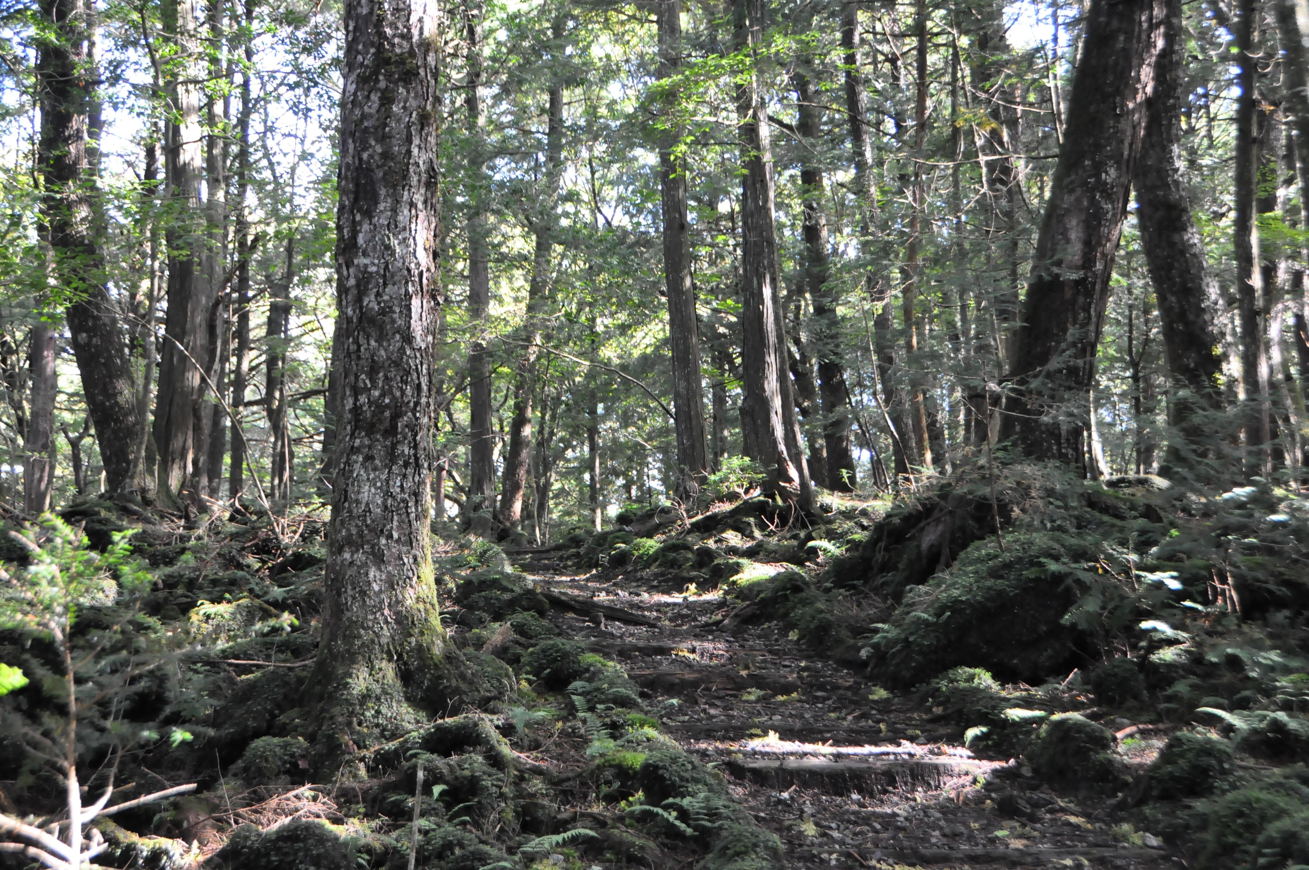 「第14回富士山麓トレイルラン」「第12回富士山原始林トレイルランin精進湖・本栖湖」大会中止