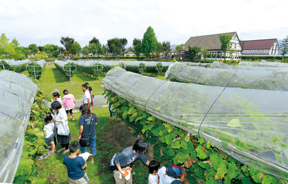 おうちで楽しむ ぶどう収穫祭とワイン祭り